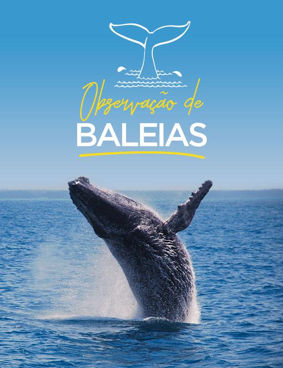 Observação das Baleias