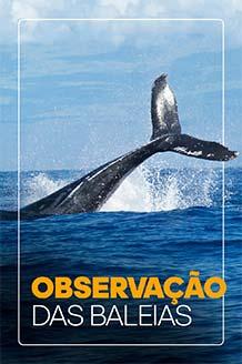 Observação de Baleias Jubarte